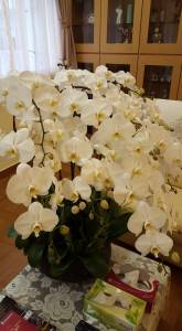 Apartment orchids 1
