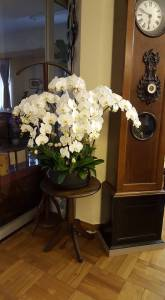 Apartment orchids 2
