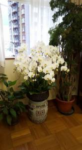 Apartment orchids 3